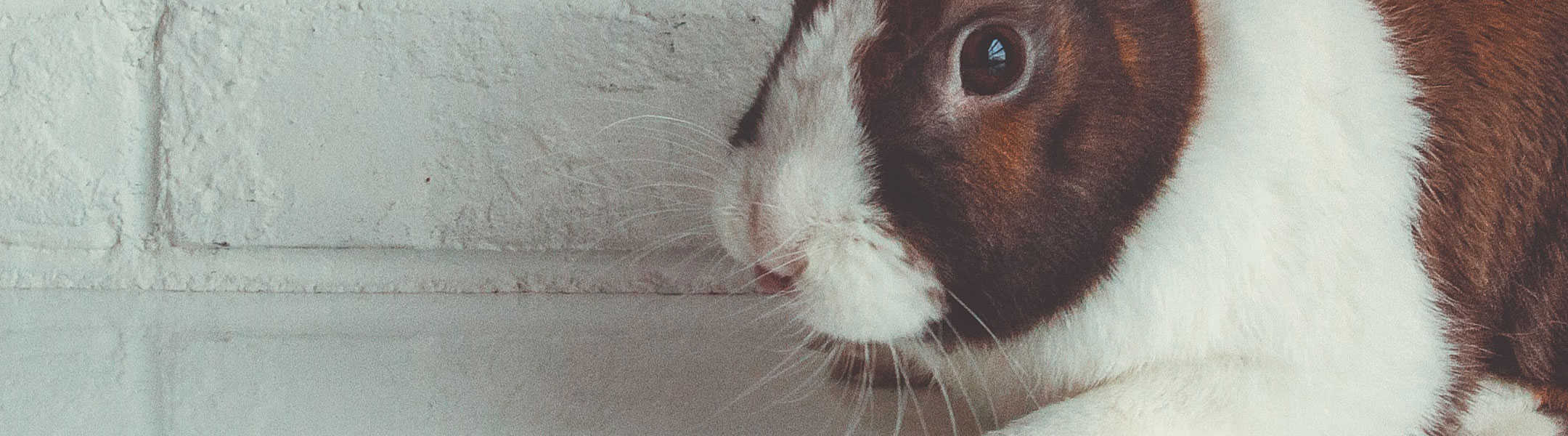Companies That Test On Animals 20 Update   Cruelty Free Kitty