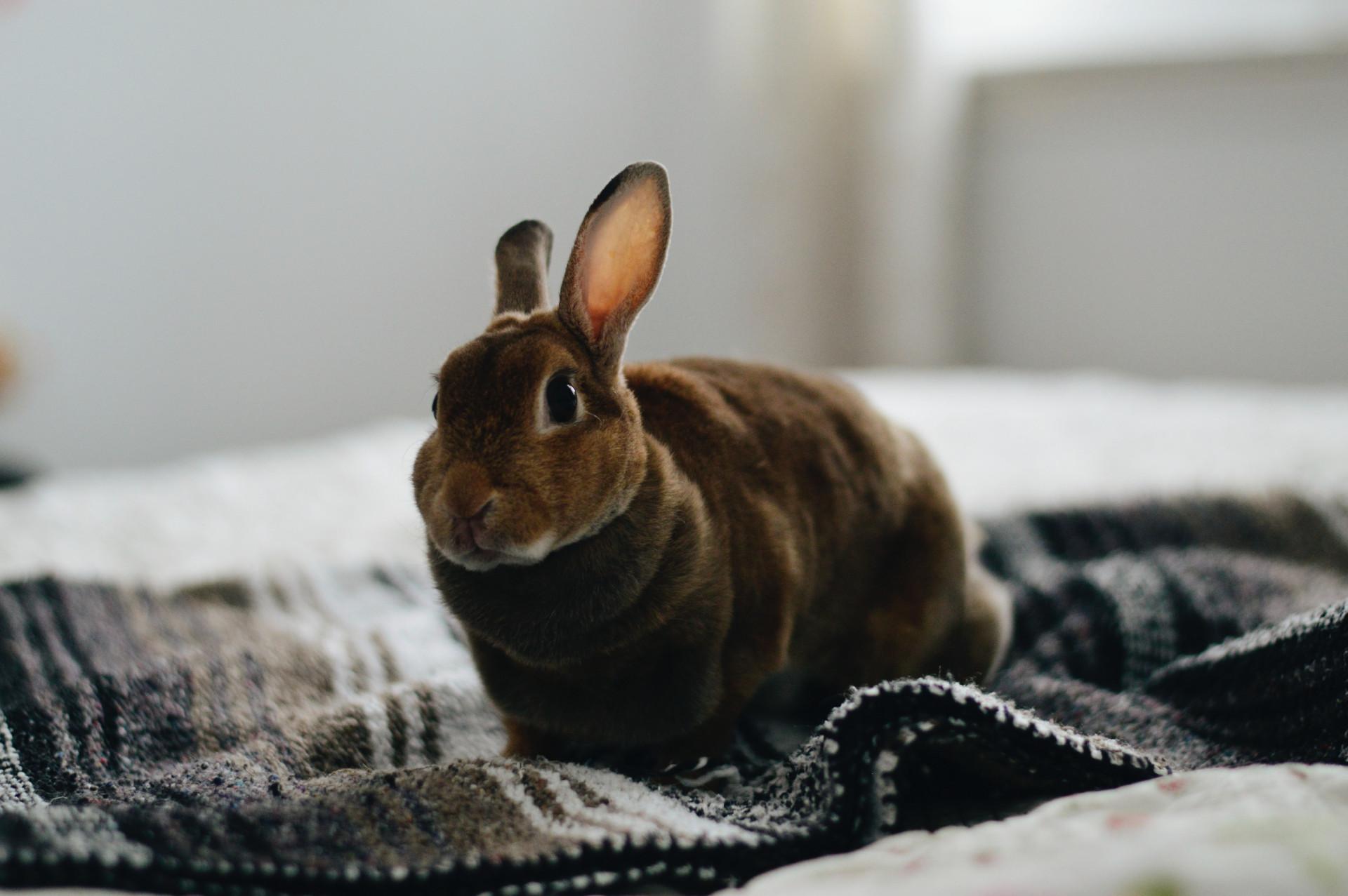 mexico bans animal testing